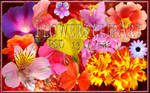 Clipart Flowers PSD 13 layers