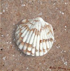 Bittersweet clam new