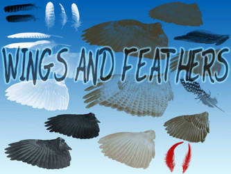 Bird Feathers and Wings