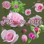 Pink rose - psd