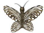 Halloween Butterfly 1