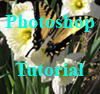 Photoshop Tutorial by markopolio-stock