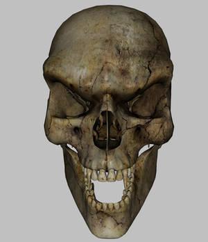 Skeleton - Skull2