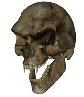 Skull - Vampire by markopolio-stock