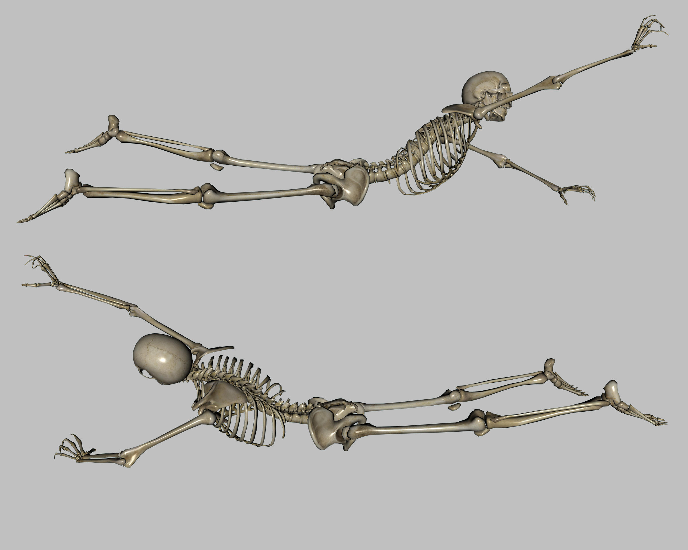Skeleton - Ground - Side by markopolio-stock
