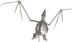 Bird Skeleton 4
