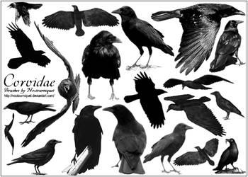 Corvidae... Ravens -N- Crows by Noctourniquet