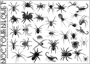 Arachnids, Eight Legged Things by Noctourniquet