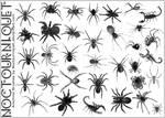 Arachnids, Eight Legged Things