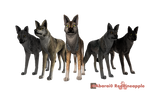 FREE Wolf Quest Presets