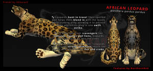 FREE!! African Leopard