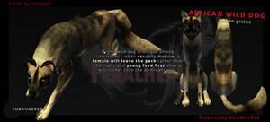FREE!! African Wild Dog 1