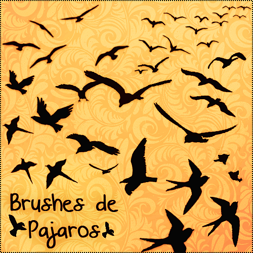 Brushes de Pajaros by PrettyLadySwag