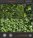 Ivy Pattern 2.0