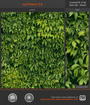 Ivy Pattern 3.0