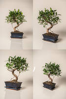 Bonsai Tree Stock by Sed-rah-Stock