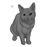 Realistic Cat Lineart Base
