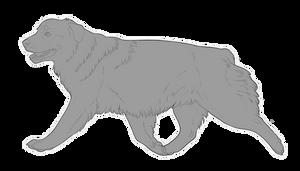 Australian Shepherd Lineart