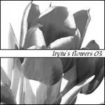 Lryiu's Flowers 03