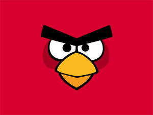 Angry Birds Wallpaper Pack-Red