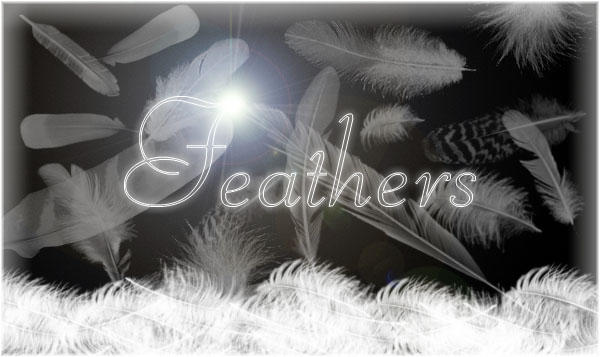 Feathers by probably-edible