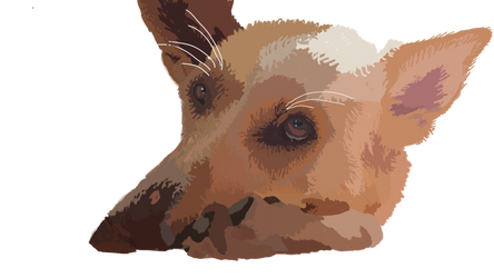 Drawing of my dog Lucy