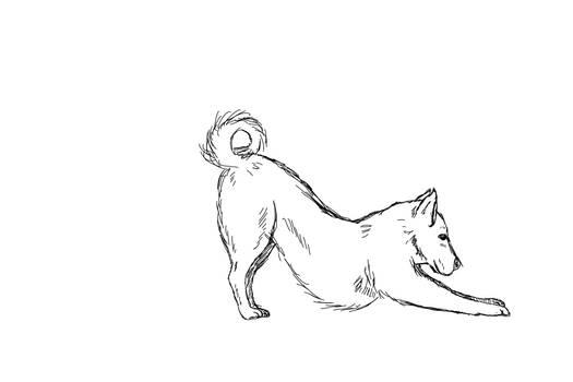 Dog strech