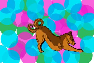 Like a dog with 2 tails 1