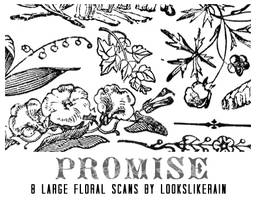 Promise by lookslikerain