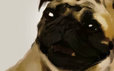 Dogs - Speed Painting by akreon