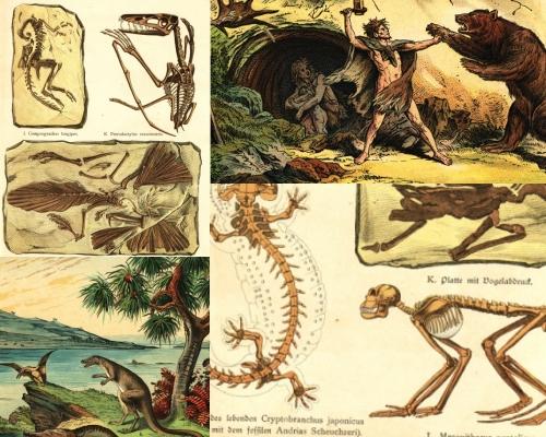NaturalHistory Book 1888