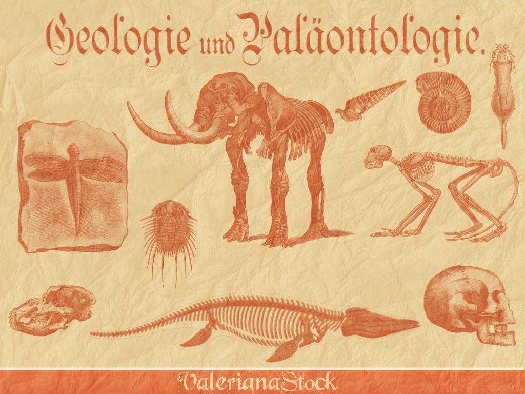 Paleontology GIMP Brushes by ValerianaSTOCK