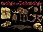 Paleontology Images PNG