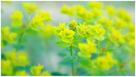 Yellow Green by duckfarm