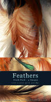 Feathers - Stock Pack