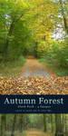 Autumn Forest - Stock Pack by kuschelirmel-stock