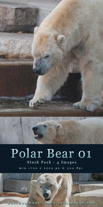Polar Bear 01 - Stock Pack by kuschelirmel-stock