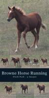 Browne Horse Running - Pack