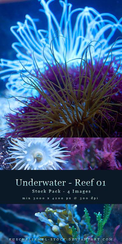 Stock Pack - Reef 01 by kuschelirmel-stock