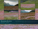 Blooming Meadow Stock Pack
