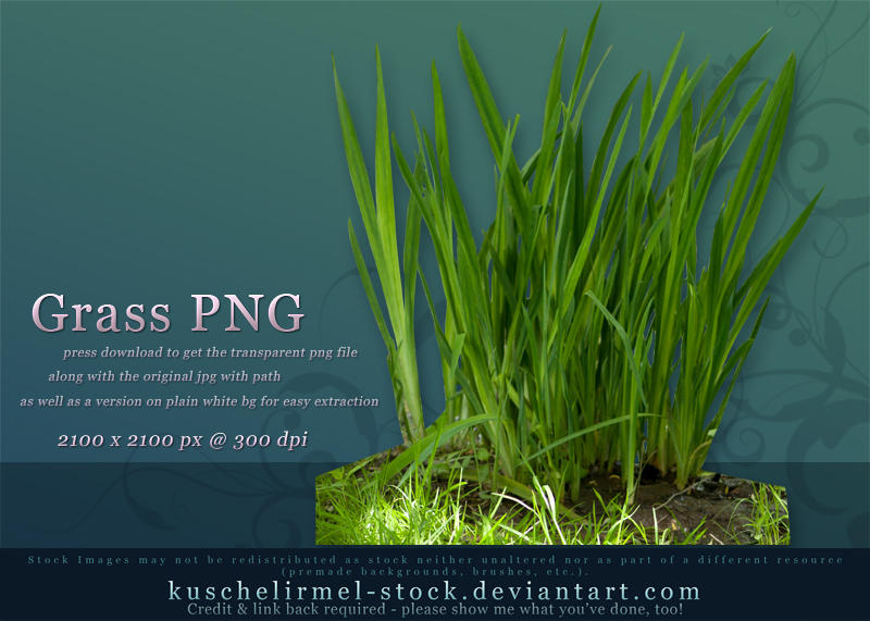 Grass PNG by kuschelirmel-stock