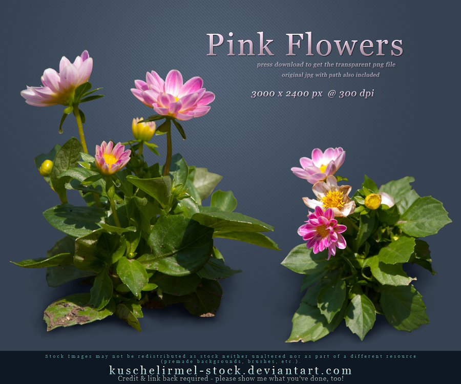 Pink Flowers PNG by kuschelirmel-stock