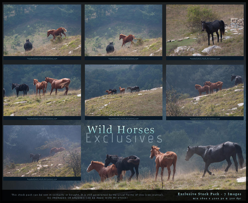 Wild Horses Exclusives by kuschelirmel-stock by kuschelirmel-stock