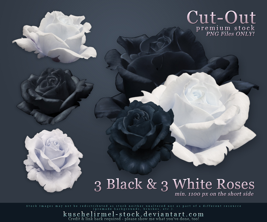Black and White Roses Precut