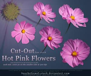 Hot Pink Flowers Cut Out by kuschelirmel-stock