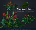 Flamingo Flower precut