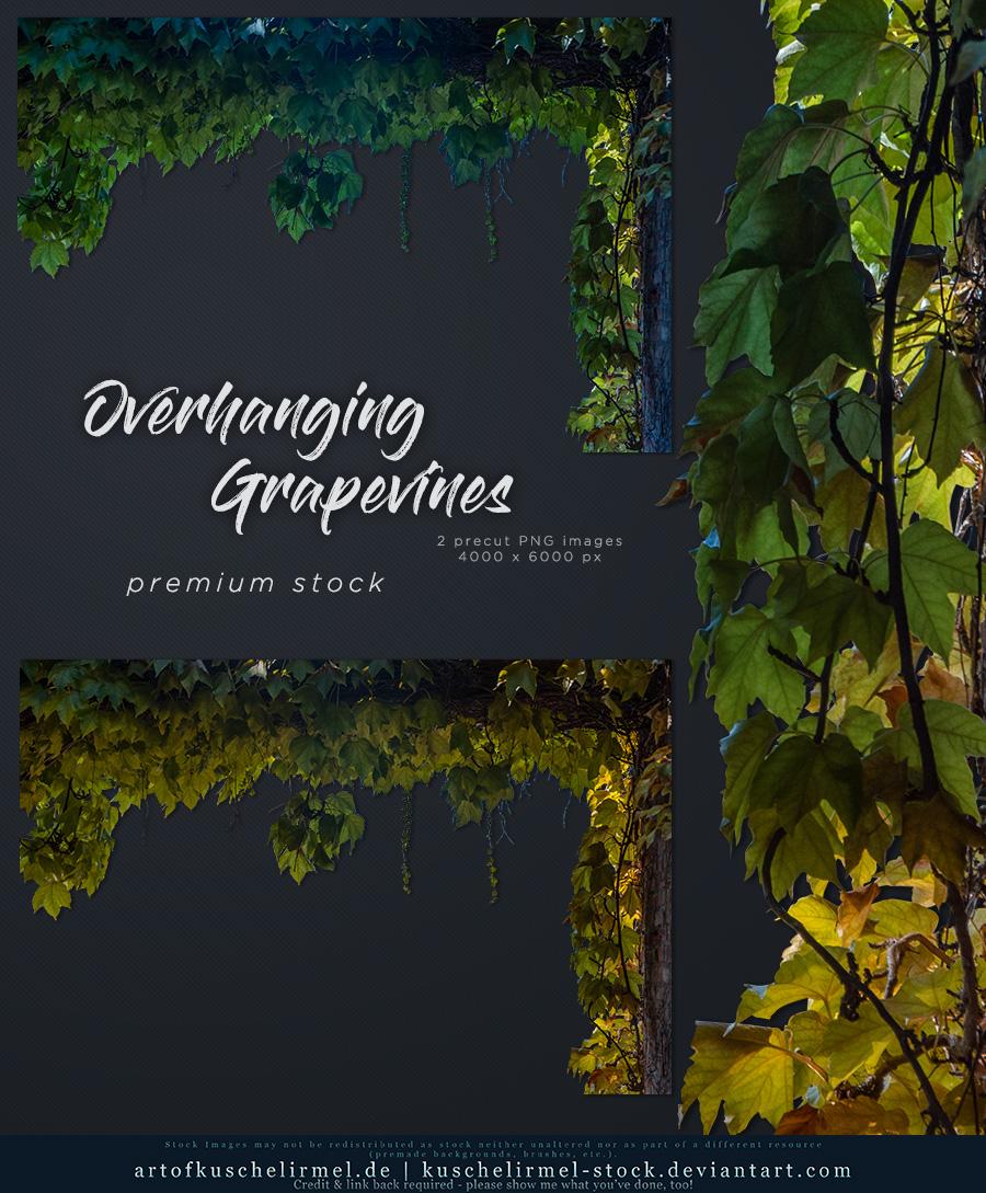Overhanging Grapevines pre-cut Premium Stock