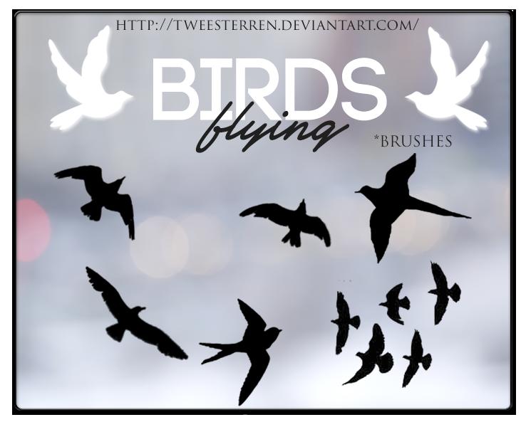 Brushes. Birds Flying By. TweeSterren by TweeSterren