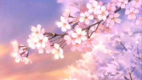 Anime Sakura flowers !