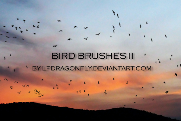 bird brushes
